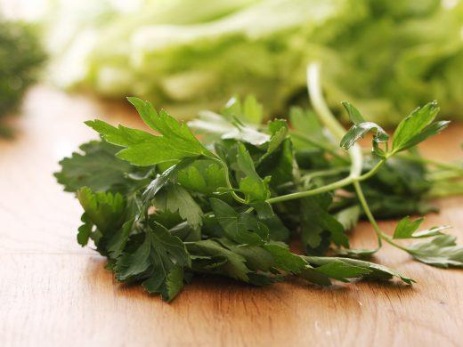 Close up fresh green parsley